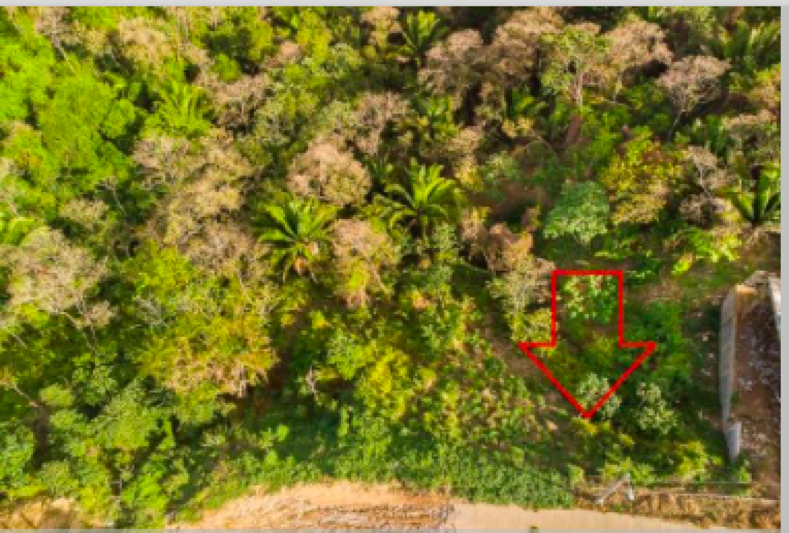 Overhead view of lush vegetation on lot and adjoining available lot