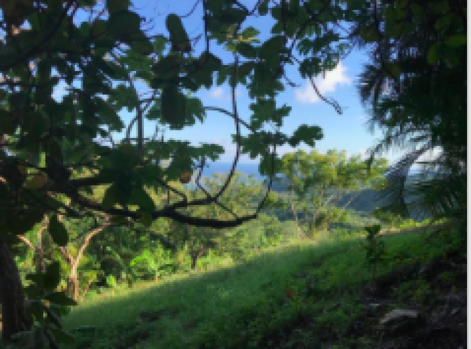 Over the rolling hills sits the Caribbean Sea peaking through the vegetation.