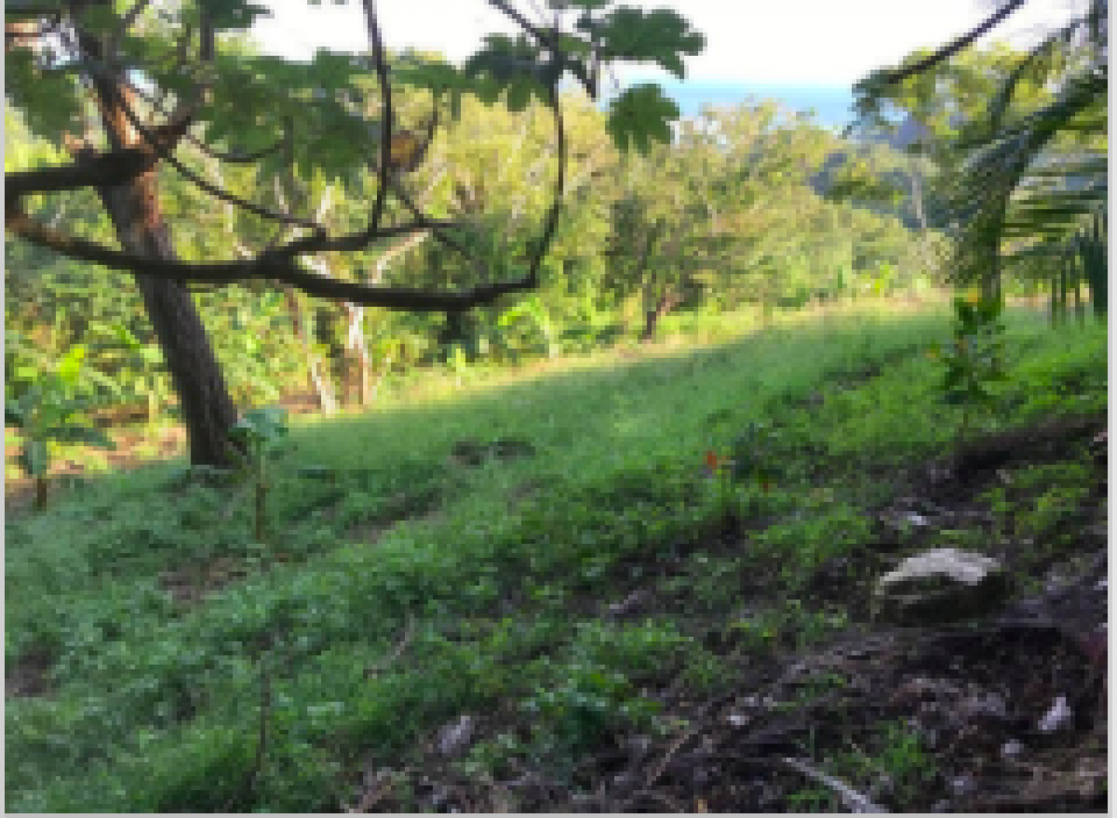 Gentle rolling hillside lot with glimpses of the ocean between the trees.