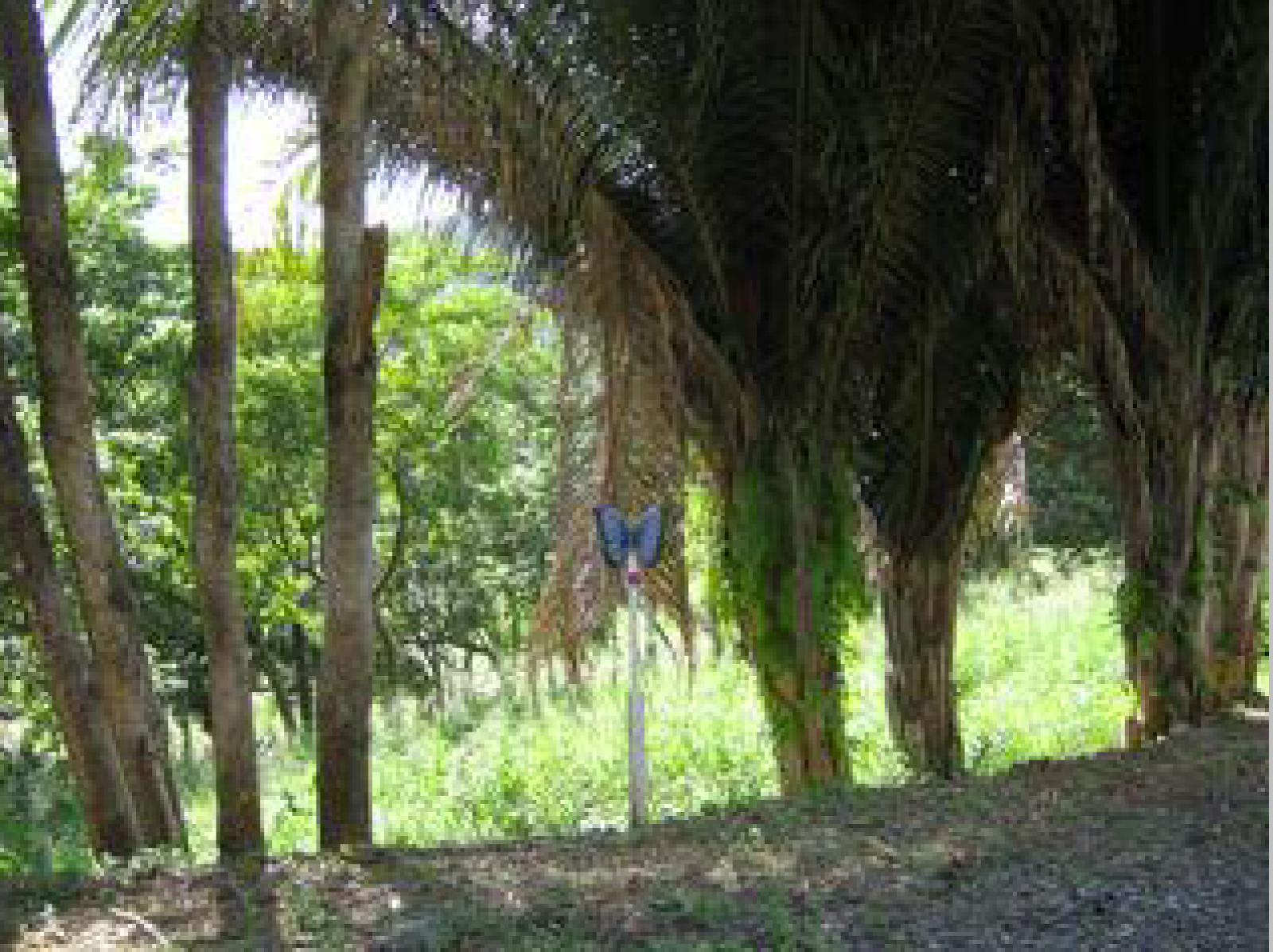 Surrounded by verdant hills and lush vegetation